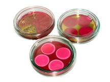 Tazas de cristal de petri para los análisis en laboratorio Imagen de archivo libre de regalías