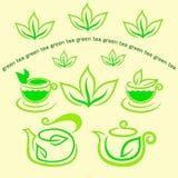 Tazas de hojas frescas del té y del verde Imagen de archivo