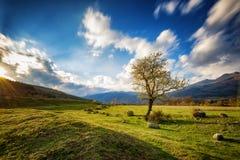 Tazha wioska, Bułgaria Obrazy Stock