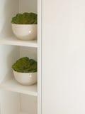 Tazones de fuente con las plantas plásticas Imágenes de archivo libres de regalías