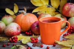 Tazza arancio sul fondo di autunno Immagini Stock Libere da Diritti