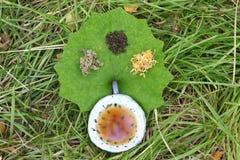 Tazza ceramica in permesso verde con le erbe Immagini Stock Libere da Diritti