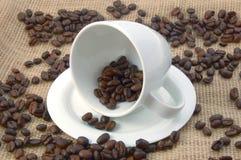 Tazza con i chicchi di caffè Immagine Stock