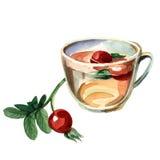 Tazza con un cankerberry Immagini Stock Libere da Diritti