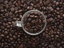 Tazza del caffè espresso in pieno dei chicchi di caffè fotografie stock libere da diritti