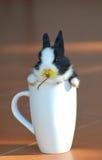 Tazza del coniglietto Immagine Stock