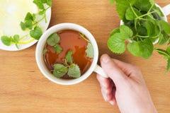Tazza del tè della menta con Melissa ed il limone a disposizione Fotografia Stock