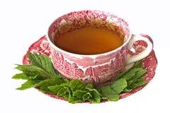 Tazza del tè della menta piperita con le foglie fresche Immagini Stock Libere da Diritti
