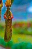 Tazza della scimmia Fotografie Stock