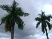 Tazza delle palme e cielo immagine stock
