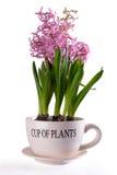 Tazza delle piante Immagine Stock