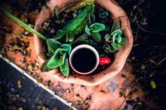 Tazza di caffè su legno Immagini Stock Libere da Diritti