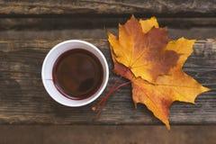 Tazza di carta con vin brulé su un banco di legno nel parco Colori 9 di autunno Fotografie Stock Libere da Diritti