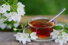 Tazza di erbe di tè con il fiore dell'Apple-albero Fotografia Stock Libera da Diritti