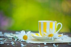 Tazza di Porcelainl con tè verde sulla tavola Fotografia Stock Libera da Diritti