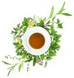 Tazza di tè con le erbe fresche Fotografie Stock