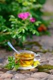 Tazza di tè con ulcera-fioritura Fotografia Stock Libera da Diritti