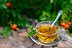 Tazza di tè con ulcera-fioritura Immagini Stock Libere da Diritti