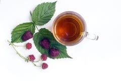 Tazza di tè di erbe Fotografia Stock