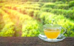 Tazza di tè e della foglia di tè caldi sulla tavola di legno e sui precedenti delle piantagioni di tè Immagini Stock Libere da Diritti