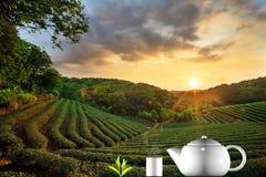 Tazza di tè e della menta con fondo piacevole Immagine Stock