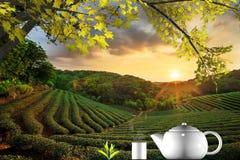 Tazza di tè e della menta con fondo piacevole Fotografia Stock Libera da Diritti