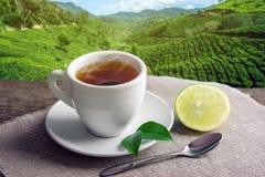 Tazza di tè marrone caldo con un pezzo di limone sui precedenti delle piantagioni Industria delle bevande del tè di concetto immagine stock