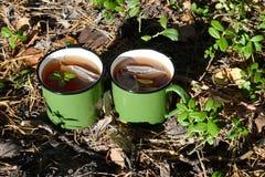 Tazza di tè nella foresta fotografie stock