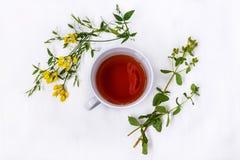 Tazza di tè nero con i fiori medicinali selvaggi su un fondo bianco Fotografia Stock