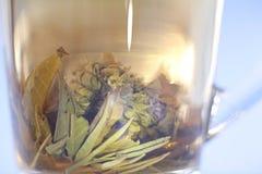 Tazza di tè verde, fondo bianco Fotografia Stock