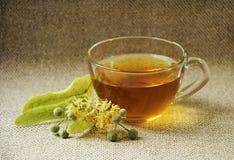 Tazza di vetro di tè Fiori del Linden tè selettivo naturopathy di infusione di erbe di vetro del horsetail del fuoco del equisetu Immagine Stock