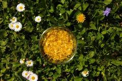 Tazza di vetro piena dei petali gialli del dente di leone Fotografie Stock Libere da Diritti