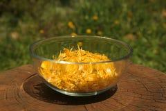 Tazza di vetro piena dei petali gialli del dente di leone Immagini Stock Libere da Diritti