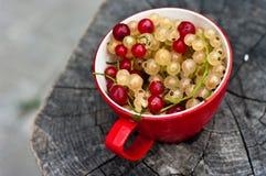 Tazza rossa con l'uva passa rossa e bianca Fotografia Stock