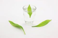 Tazze, acqua purificata, foglie verdi Fotografia Stock Libera da Diritti
