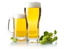 Tazze di birra sulla tavola con i coni di luppolo su bianco Immagine Stock Libera da Diritti