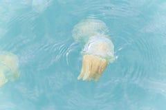 Tazze variopinte delle meduse Fotografia Stock Libera da Diritti