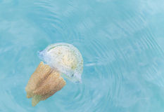 Tazze variopinte delle meduse Immagini Stock Libere da Diritti