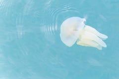 Tazze variopinte delle meduse Fotografia Stock
