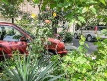 TBILISI, GEÓRGIA - - 17 DE MAIO DE 2018: A jarda de uma casa, árvores da flor, carros na jarda Primavera na cidade Imagens de Stock Royalty Free