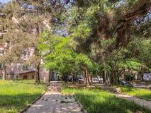 TBILISI, GEÓRGIA - - 17 DE MAIO DE 2018: A jarda de uma casa, árvores da flor, grama verde, carros na jarda Primavera na cidade Imagens de Stock Royalty Free