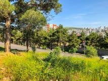 TBILISI, GEÓRGIA - - 17 DE MAIO DE 2018: Vista magnífica da cidade, pinheiros, carros na estrada Primavera na cidade Imagens de Stock Royalty Free