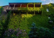 Tbilisi zieleni liście Buduje taras obraz stock