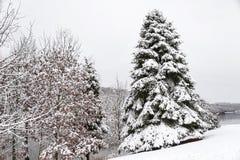 Täckt snö sörjer trädet i en vinterunderland Arkivbilder