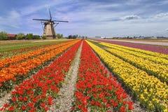 Tęcza koloru tulipanu gospodarstwo rolne Fotografia Stock