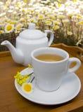 Te杯子和茶壶 图库摄影