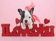 Te amo perrito Imagen de archivo libre de regalías