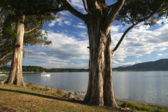 Te Anau lake Royalty Free Stock Photo