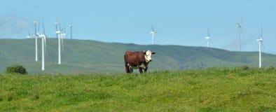 Te Apiti Wind Farm a Palmerston del nord, Nuova Zelanda Fotografia Stock Libera da Diritti
