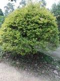 Te drzewa mogą pięknie dekorujący Zdjęcie Stock